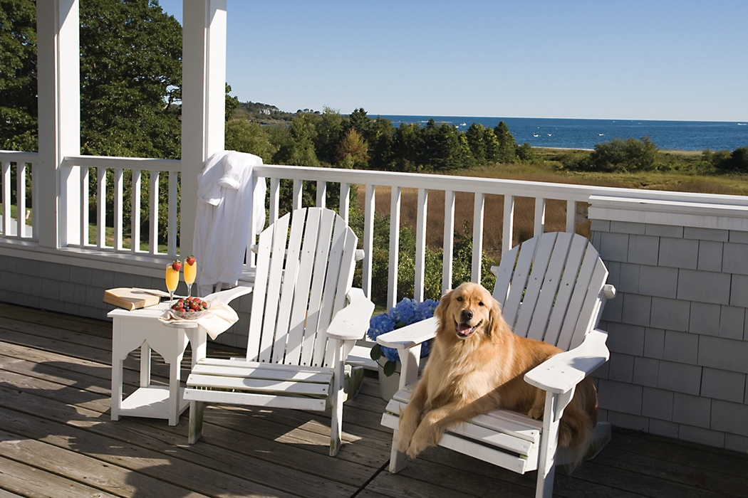 How to Choose Pet Friendly Patio Furniture